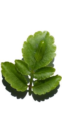 Leaf ofLife